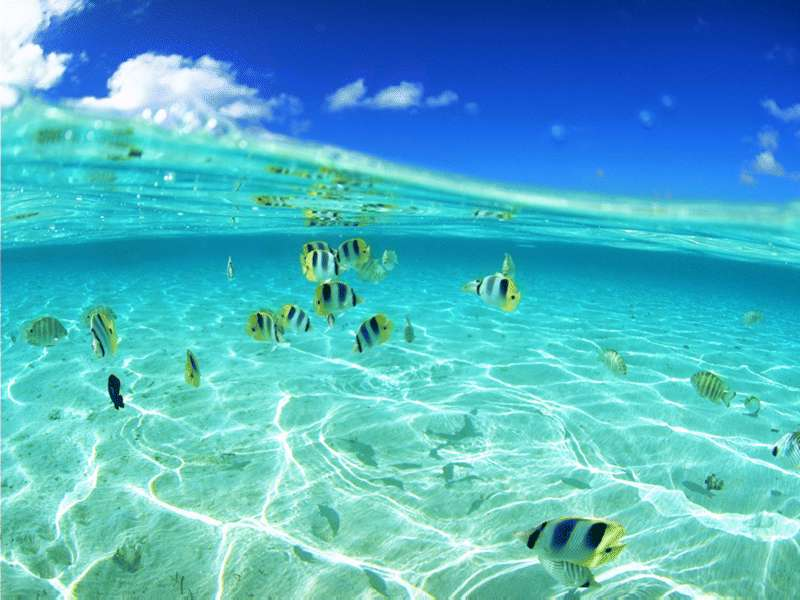 海底两万里-设计欣赏-素材中国-online.sccnn.com