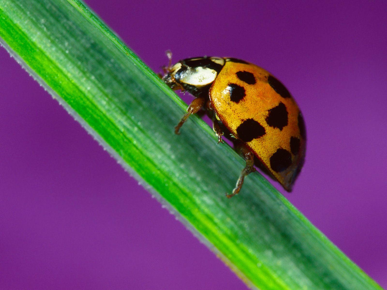 动物写真-昆虫-设计欣赏-素材中国-online.sccnn.com
