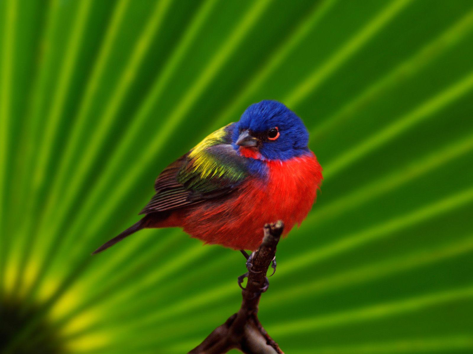 动物写真-鸟-设计欣赏-素材中国-online.sccnn.com