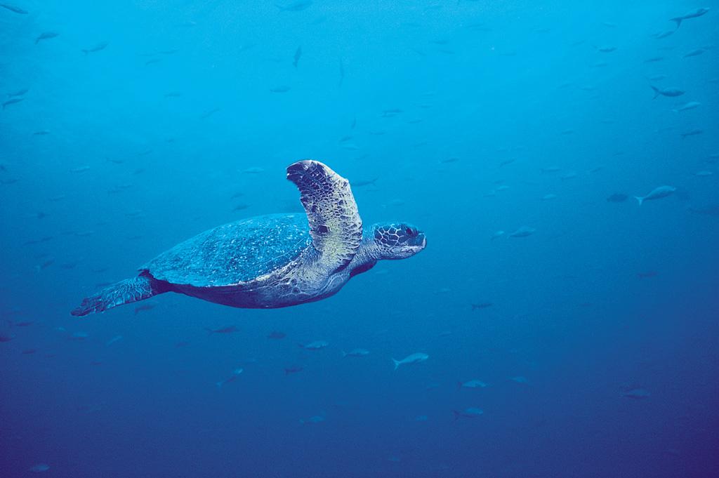 深海美景欣赏-精彩贴图-彭城社区; 深海里的鱼类[100p]; 深海鱼类[100