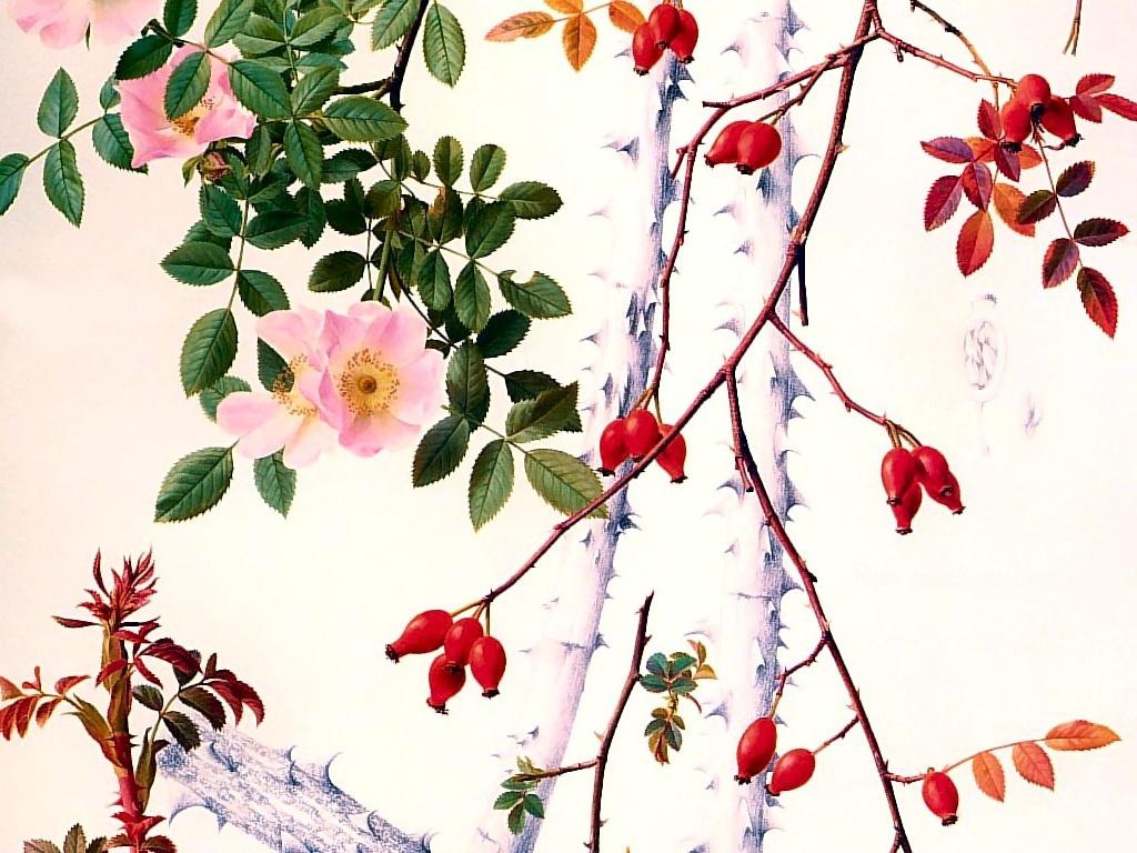 手绘植物动物-设计欣赏-素材中国-online.sccnn.com